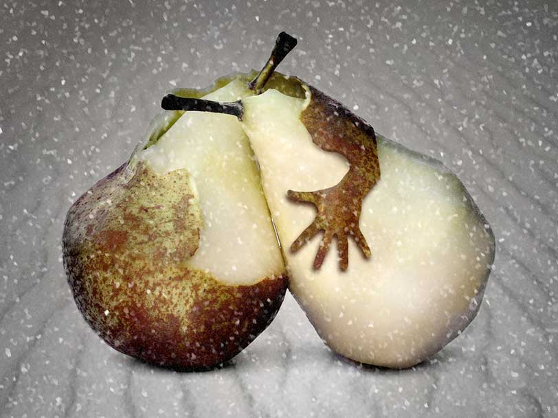 Hugging pears make upside-down heart